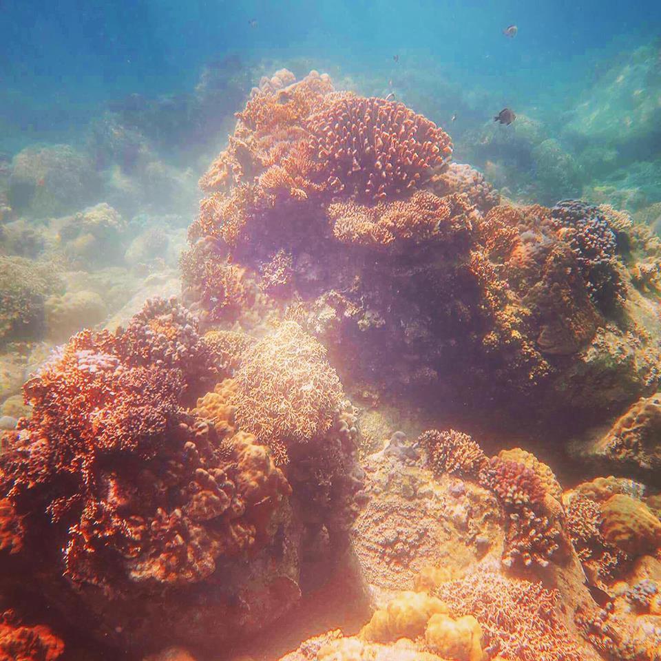 lan-bien-4 Thú Vui Lặn Biển Khám Phá Đại Dương Vịnh Nha Trang Cẩm Nang Chưa được phân loại Đia Danh Du Lịch Tin Tức  Scuba Diving Lặn Biển Hòn Mun