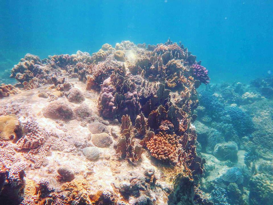 lan-bien-6 Thú Vui Lặn Biển Khám Phá Đại Dương Vịnh Nha Trang Cẩm Nang Chưa được phân loại Đia Danh Du Lịch Tin Tức  Scuba Diving Lặn Biển Hòn Mun