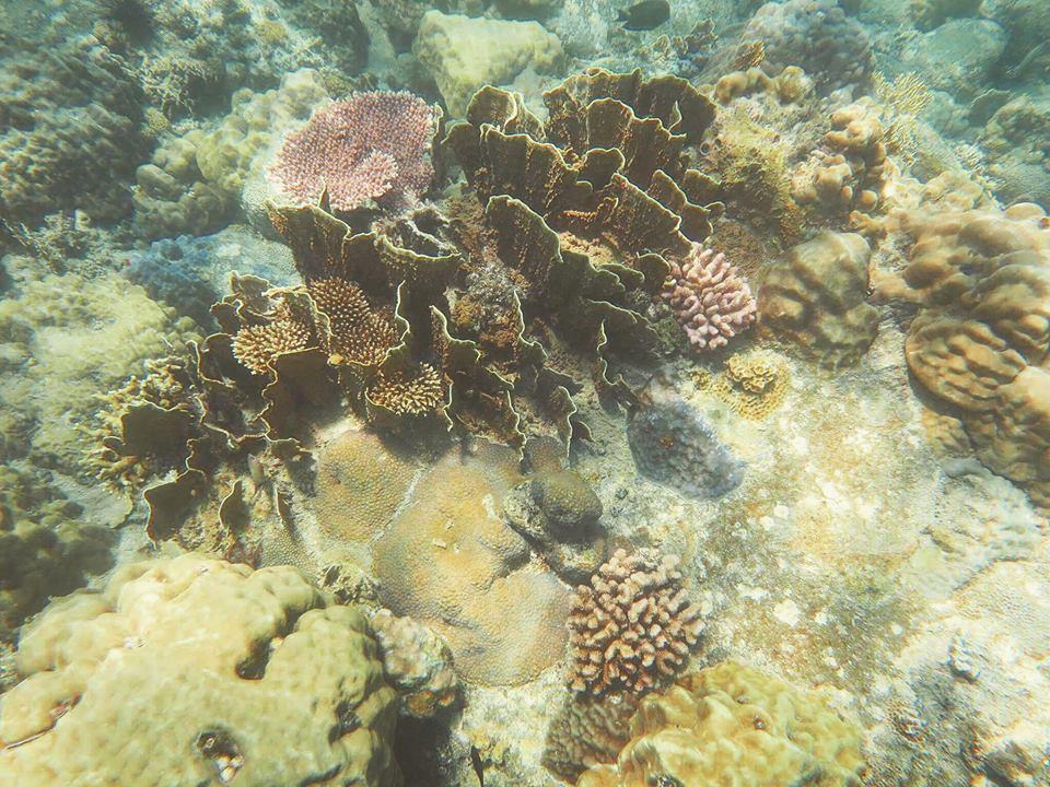 lan-bien-7 Thú Vui Lặn Biển Khám Phá Đại Dương Vịnh Nha Trang Cẩm Nang Chưa được phân loại Đia Danh Du Lịch Tin Tức  Scuba Diving Lặn Biển Hòn Mun