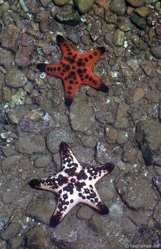 ho-ca-1 Hồ Cá Trí Nguyên năm 1992 Tin Tức  HỒ CÁ TRÍ NGUYÊN