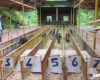 Cuộc đua heo rừng kỳ thú ở Khánh Hòa - Thác YangBay