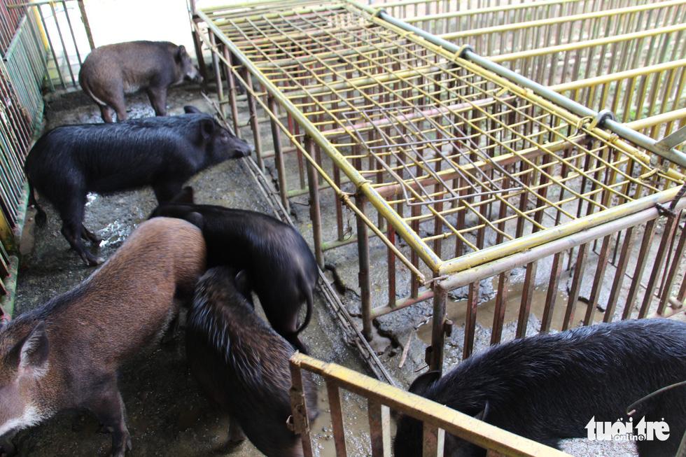 logo-img4400-1548587895316697739089 Cuộc đua heo rừng kỳ thú ở Khánh Hòa - Thác YangBay Đia Danh Du Lịch Tin Tức  YANGBAY