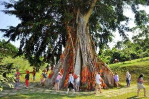 cay-moc-than-khu-du-lich-thac-yang-bay-nha-trangi1-300x199 TOUR NHA TRANG 1 NGÀY: HÀNH TRÌNH DU LỊCH THÁC YANG BAY