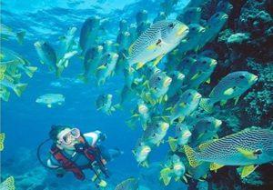 Trải Nghiệm 1 ngày với môn thể thao lặn biển trên vịnh Nha Trang