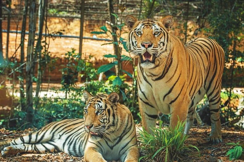 """Vinpearl Safari với một ngày vào vai """"nhà động vật học"""" giữa """"thiên đường hoang dã"""""""